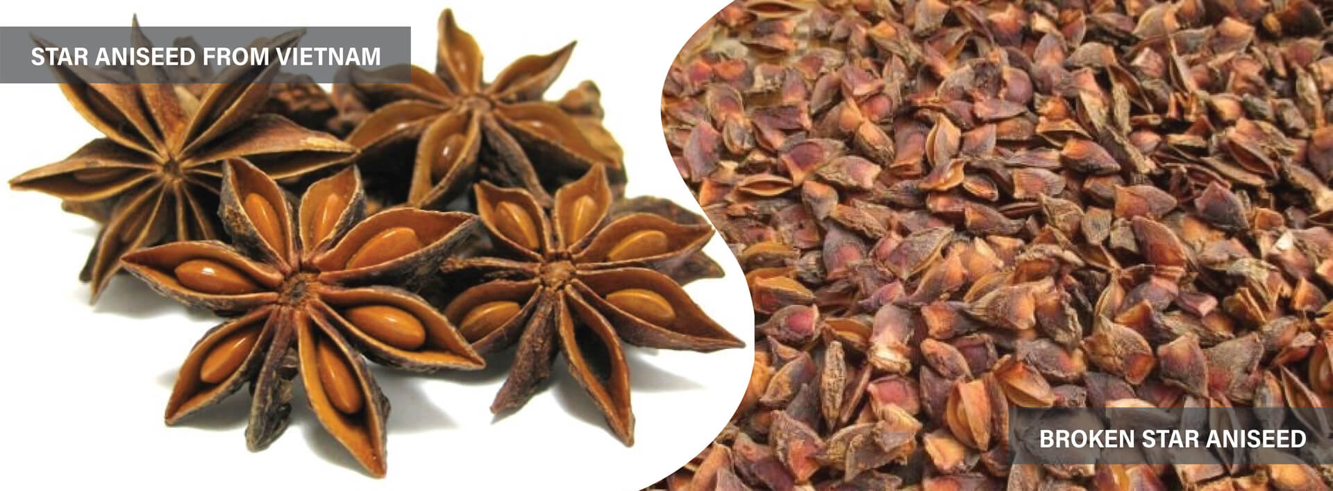 Hoa hồi / Star aniseed